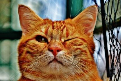 cat winking