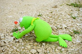 kermit search